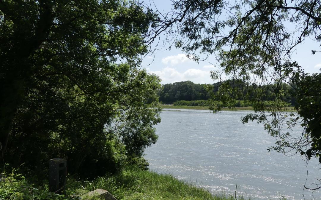 Balade Paléodécouvertes – «La Réserve Naturelle Inondable de Printegarde» à La Voulte-sur-Rhône